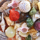 Shell assortment by price